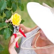 rosie gardening 02 facebook wp